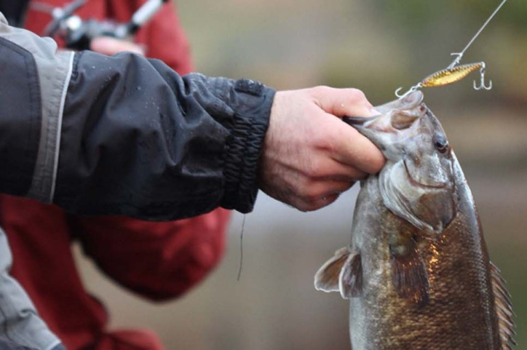 Best River Smallmouth Baits Ever?