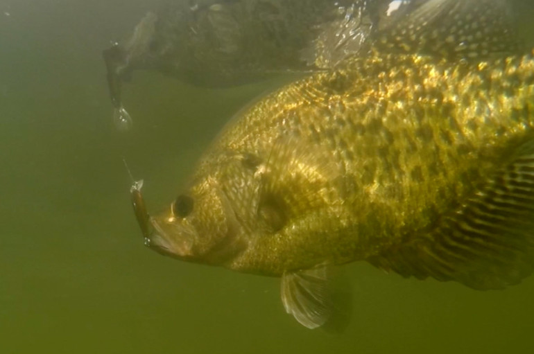 The Crappies Are In!