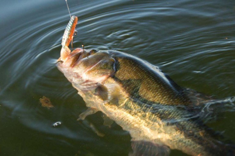Line Choice—Day for Fluorocarbon
