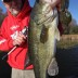 Fall Largemouth