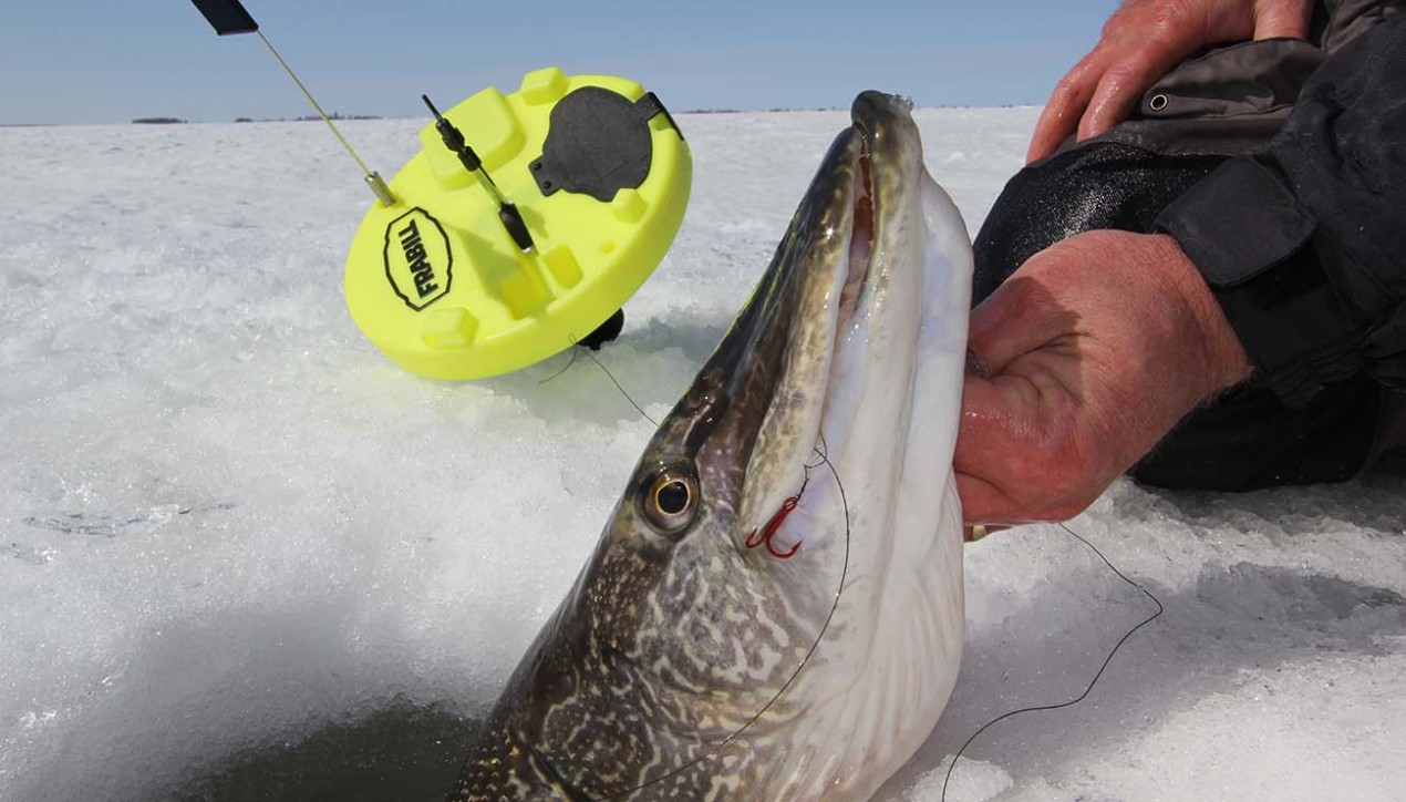 Best Line For Ice Fishing? All of 'em!